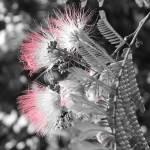"""""Blossom"""" by tonyj1022"