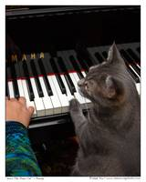 Nora The Piano Cat™ - n0018
