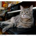 """Nora The Piano Cat™ - n0028"" by ravenswingstudio"