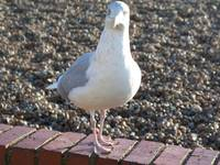 sid the seagull says what?