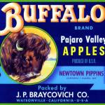 """Buffalo Pajaro Valley Art"" by LABELSTONE"