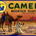 """Camel Mountain Pear Label"" by LABELSTONE"