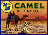 Camel Mountain Pear Label