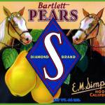 """""""Palamino Horse Pear Label"""" by LABELSTONE"""
