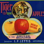 """Tiger Apple Advertising Art"" by LABELSTONE"