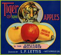 Tiger Apple Advertising Art