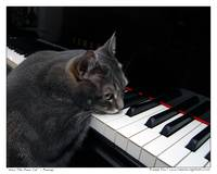 Nora The Piano Cat™ - n0030