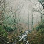 """Smoky  Mountain Stream"" by Laurel"