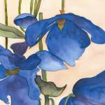 """Blue Poppies"" by janporterfieldwatercolors"