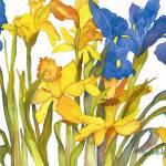 """Daffodils and Iris"" by janporterfieldwatercolors"