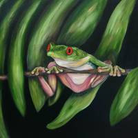 Red eyed Tree Frog #2