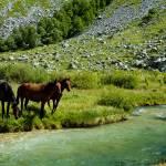 """""""Horses on watering"""" by savenkov"""