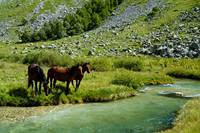 Horses on watering