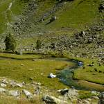 """Alpine meadow"" by savenkov"