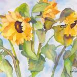 """""""Sunny Sunflower"""" by janporterfieldwatercolors"""