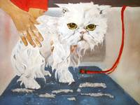 Pathetic Persian Getting a Bath