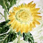 """lone sunflower large"" by derekmccrea"