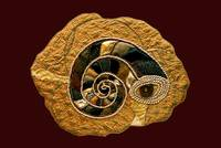 Golden Ammonite Textile