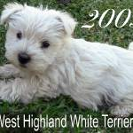 """Puppy Announcement!"" by Westie"