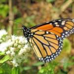 """Butterfly"" by friend_cuttack"