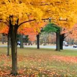 """""""Autumn scenery"""" by friend_cuttack"""