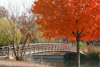 Autumn Scenery from a Park