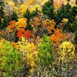 """Adirondack Fall Foliage Watercolor"" by HodlinGallery"