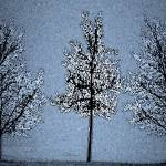 """Winter Trees Watercolor"" by HodlinGallery"
