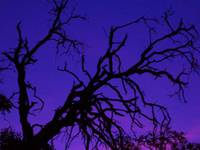 Purple Sky & Neverending Branches