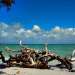 """Driftwood"" by pcsphotography"
