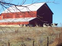 Amish Bank Barn in the Winter