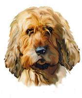otterhound portrait