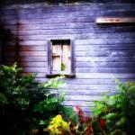 """""""Madrid farm window"""" by LauraMillen"""