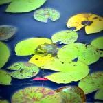 """""""ISU frog"""" by LauraMillen"""