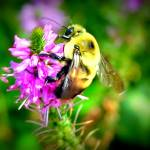 """""""All the Buzz"""" by LauraMillen"""