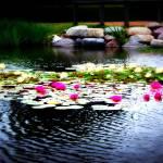 """""""ISU Pond"""" by LauraMillen"""
