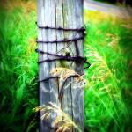 """""""post in country"""" by LauraMillen"""