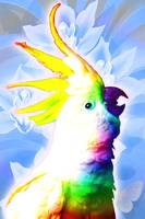 Rainbow Cockatoo