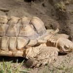 """""""tortoise"""" by melissaanderson"""