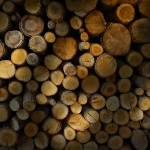 """Firewood"" by maistora"