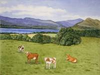 Scotland with Cows