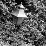 """lamp in bushes"" by mlindseyphoto"