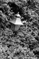 lamp in bushes