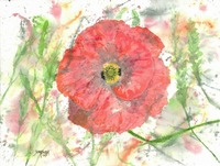 poppy flower modern art