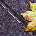 """Fresh Rain On Fallen Leaf"" by soartsyithurts"