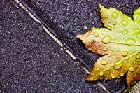 Fresh Rain On Fallen Leaf