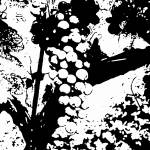 """GrapesBW"" by rawbacon9975"