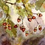 """Acorns Botanical Oak Tree Watercolor"" by GinetteCallaway"