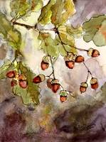 Acorns Botanical Oak Tree Watercolor