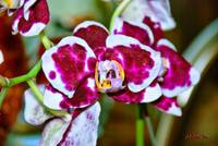 Marta's Orchids